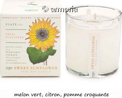 Bougie parfumée Sweet Sunflower - Plant The Box