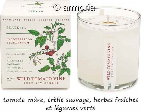 Bougie parfumée Wild Tomato Vine - Plant The Box