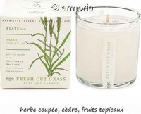 Bougie parfumée Fresh Cut Grass - Plant The Box