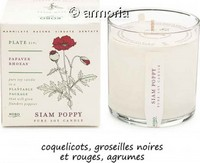 Bougie parfumée Siam Poppy - Plant The Box